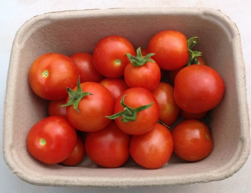 Tomatoes are here